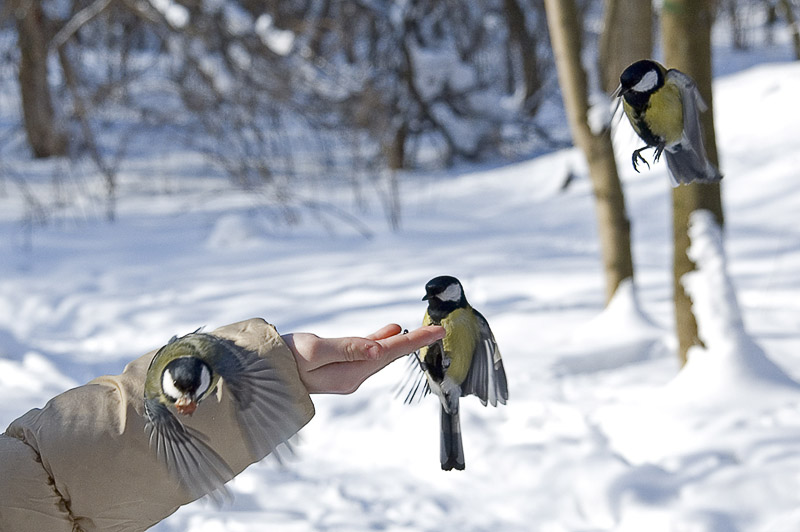 "photo ""Winter: how not to get hungry"" tags: nature, misc., wild animals"