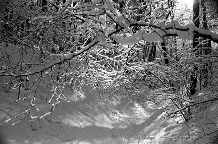 """фото """"Овражек."""" метки: пейзаж, зима"""