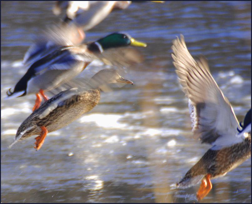 "фото ""По сигналу тревоги"" метки: природа, дикие животные"