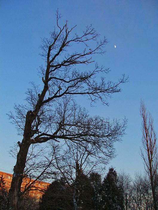 """фото """"А Вы луну достать смогли бы?!..."""" метки: пейзаж, архитектура, зима"""