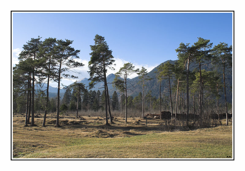 """фото """"Chaos"""" метки: пейзаж, лес"""