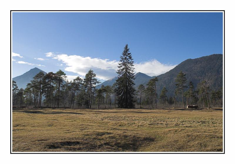 "фото ""Big one"" метки: пейзаж, лес"