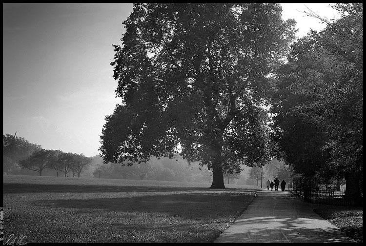 """photo """"Hyde Park / London"""" tags: landscape, black&white, forest"""