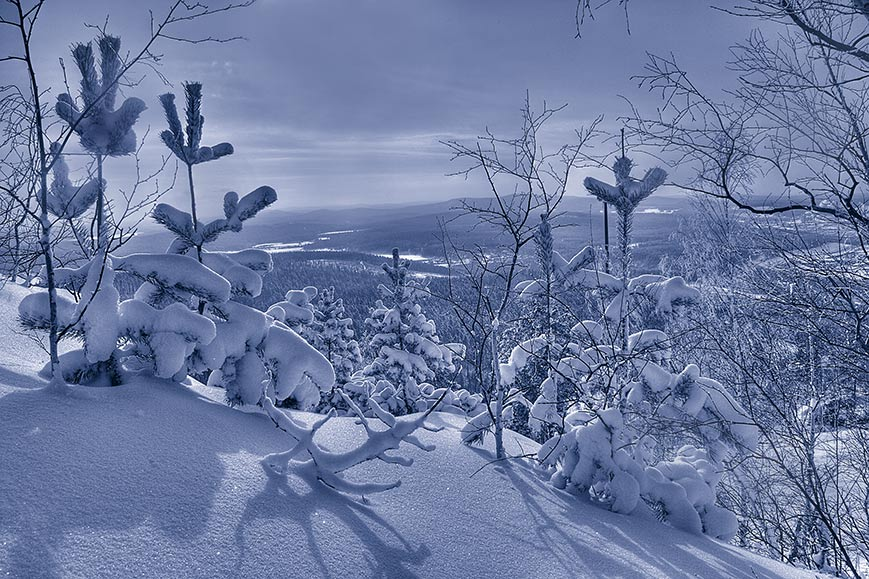 "photo ""*Winter*"" tags: black&white, landscape, forest"