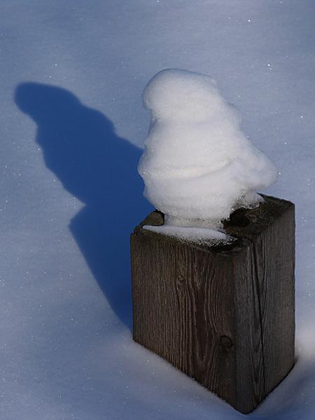 "фото ""Вот такая птичка"" метки: пейзаж, зима"