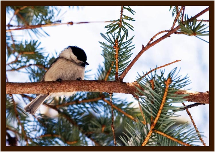 """фото """"Хорошо сидим"""" метки: природа, дикие животные"""