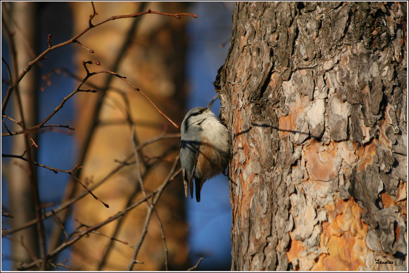 """фото """"Скоро весна"""" метки: природа,"""