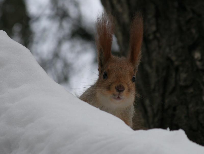 "фото ""Орехи принесли?"" метки: ,"