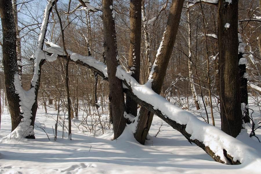"""фото """"Зимний пейзаж"""" метки: пейзаж, зима"""