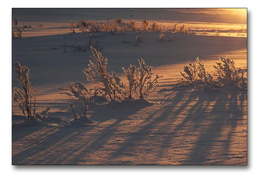 """фото """"Red snow"""" метки: пейзаж, зима"""