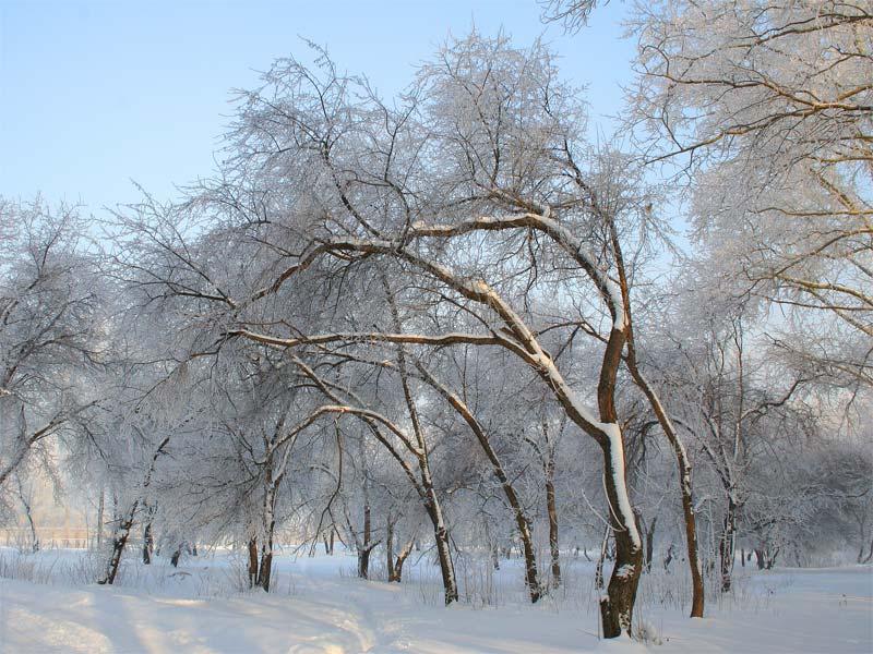 "фото ""зима"" метки: ,"