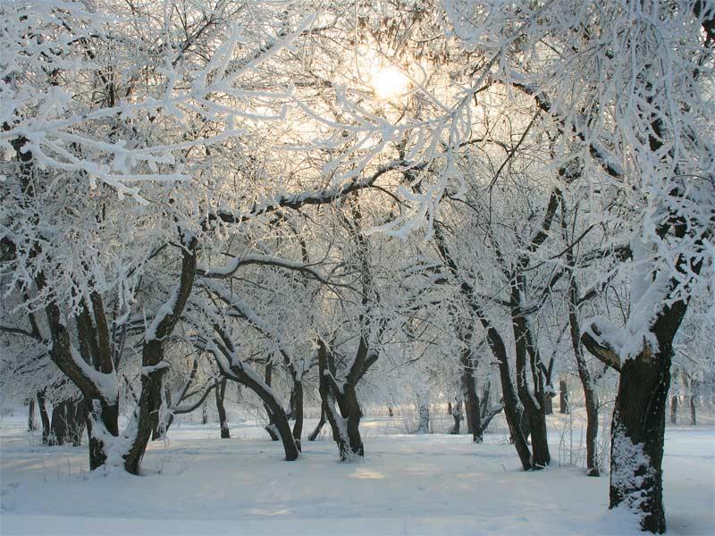 """фото """"зима, деревья"""" метки: ,"""