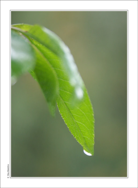 "фото ""Весенняя (7)..."" метки: природа, цветы"