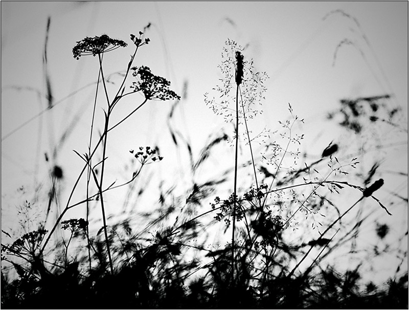 "photo ""dance of the grass"" tags: landscape, nature, flowers, summer"