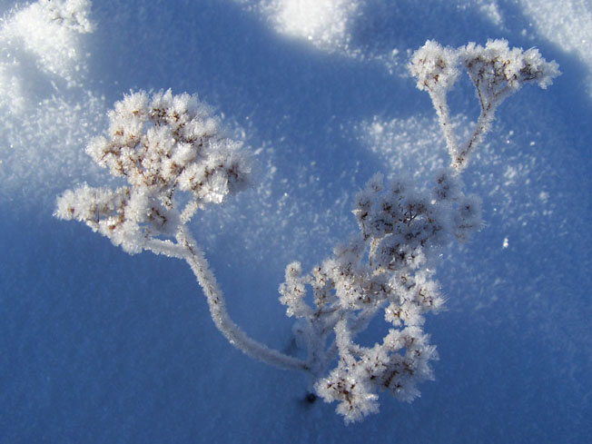 "фото ""Морозная сказка"" метки: природа,"