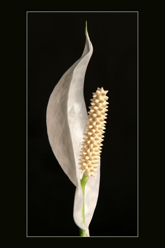 """фото """"eroticism"""" метки: природа, цветы"""