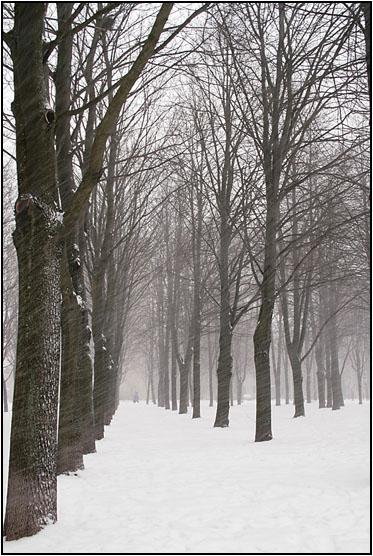 """фото """"Снегопад"""" метки: пейзаж, природа, зима"""