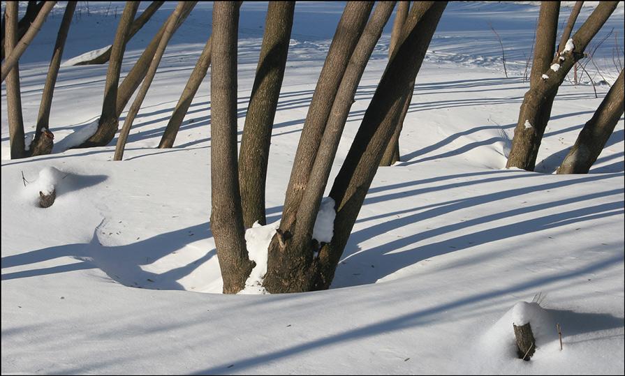 "фото ""В зимнем парке"" метки: пейзаж, зима"