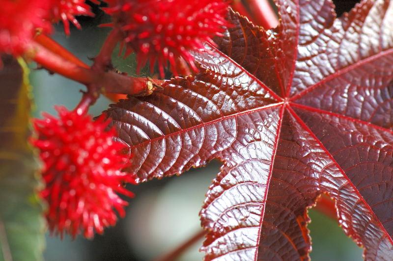 "фото ""Botanic treasure"" метки: природа, цветы"