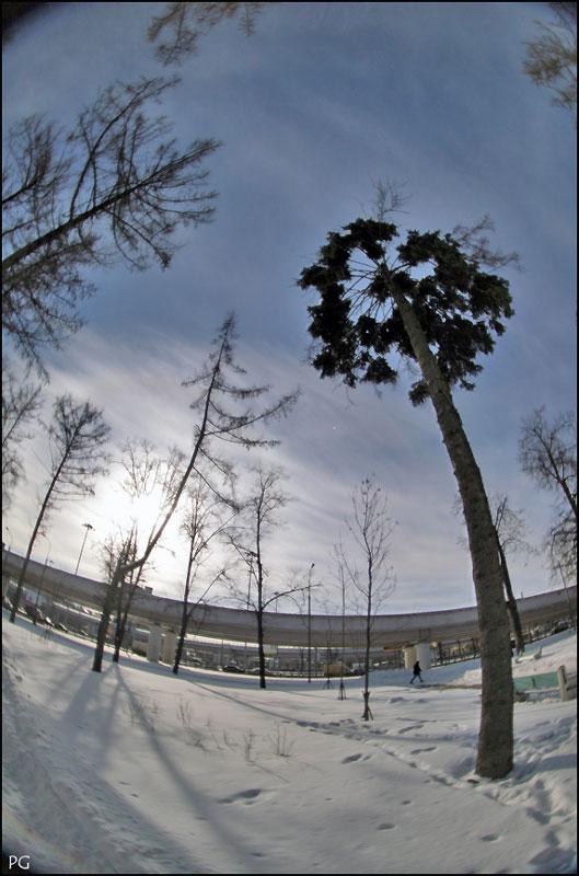 """фото """"другая пальма"""" метки: природа,"""