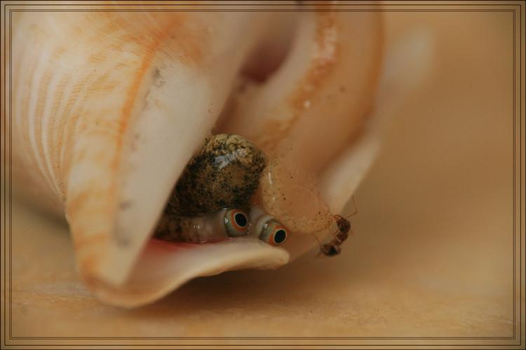 """фото """"Эти глаза напротив..."""" метки: природа, макро и крупный план, насекомое"""