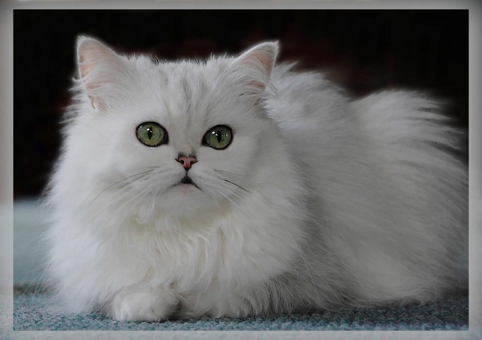 """фото """"Моя принцесса"""" метки: природа, домашние животные"""