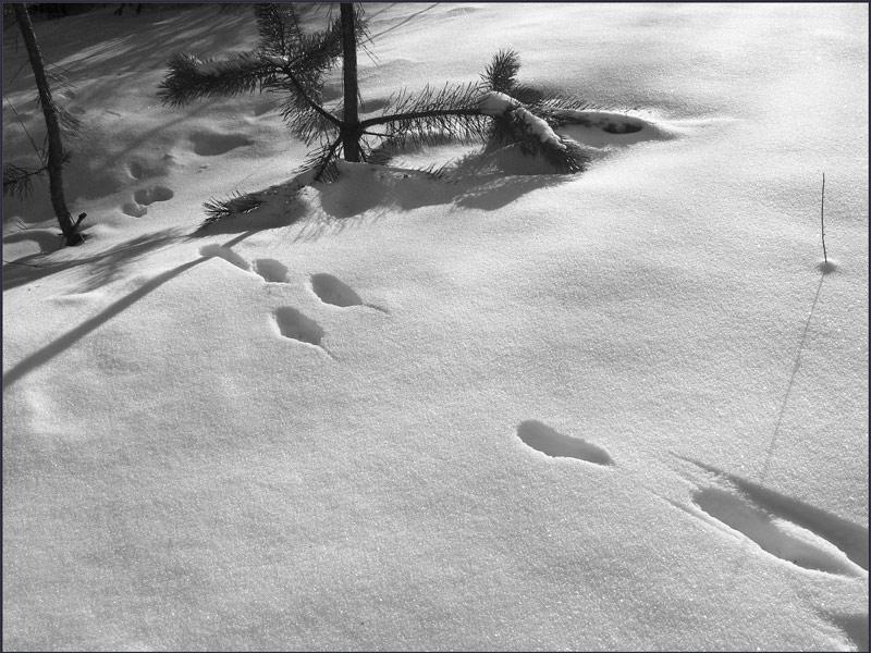 """фото """"Зайчишка пробегал."""" метки: пейзаж, черно-белые, зима"""