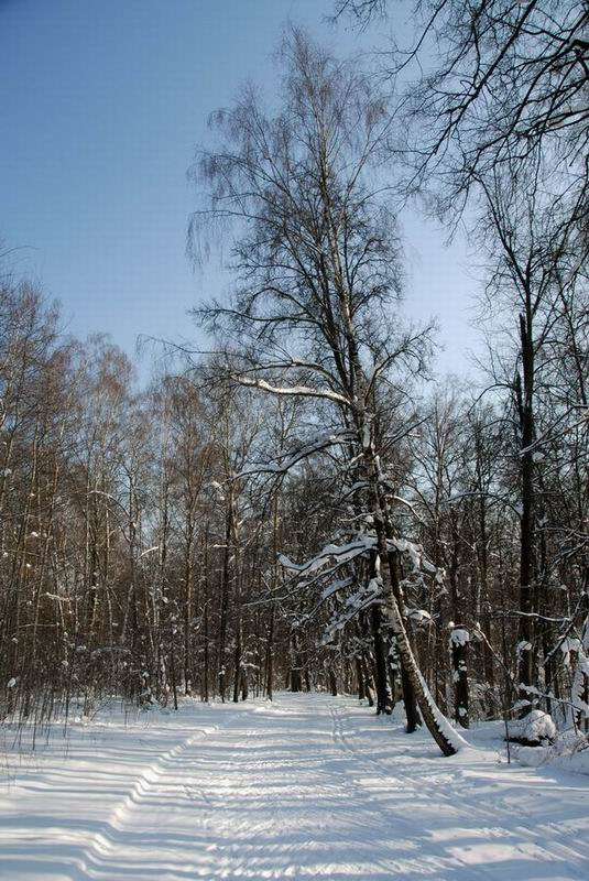 "photo ""In the winter woods"" tags: landscape, winter"