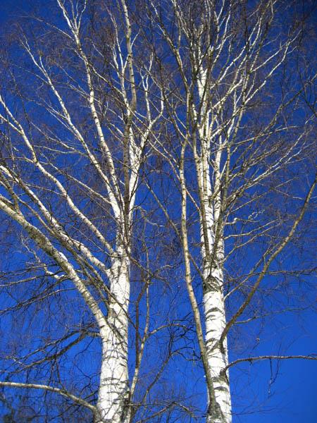 """фото """"Белые на голубом"""" метки: пейзаж, зима"""