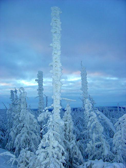 "фото ""Идолы Заполярья"" метки: пейзаж, зима, лес"