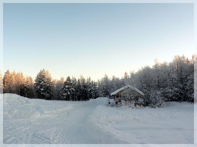 """фото """"*"""" метки: пейзаж, природа, лес"""