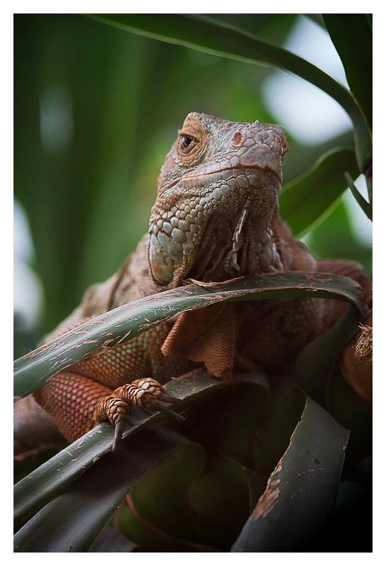 """фото """"Сноб"""" метки: природа, дикие животные"""