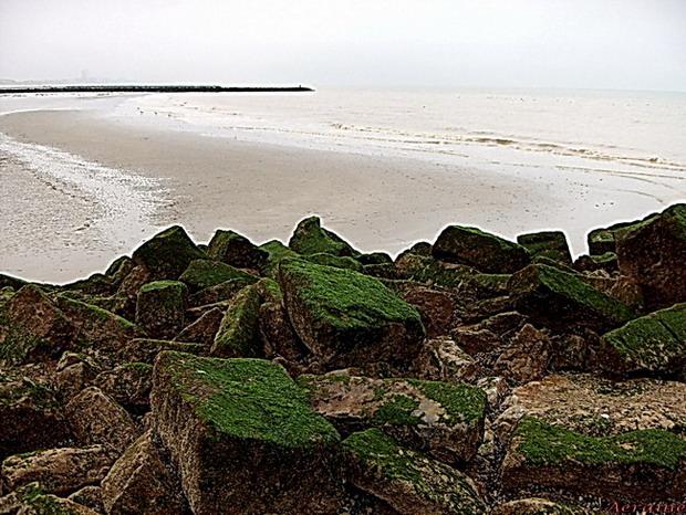 """фото """"Wild sea."""" метки: пейзаж, вода, зима"""