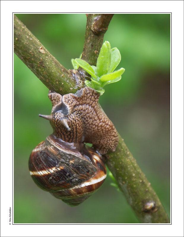 """фото """"Весенняя (8)..."""" метки: природа,"""