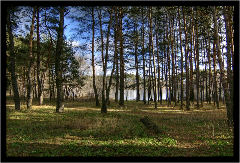 """photo """"Road to the lake"""" tags: landscape, forest, water"""