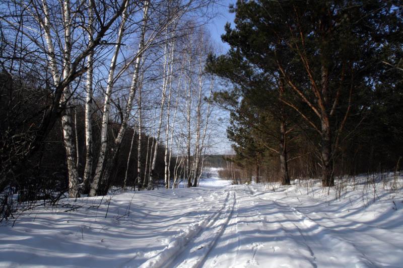 """фото """"Зимняя аллея"""" метки: пейзаж, зима"""