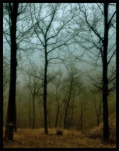 "фото ""mistery of the forest"" метки: пейзаж, лес"
