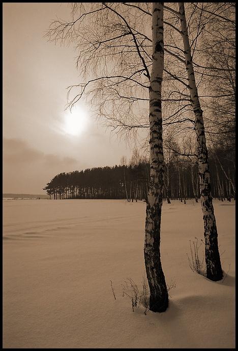 """фото """"зимняя меланхолия"""" метки: пейзаж, зима, лес"""