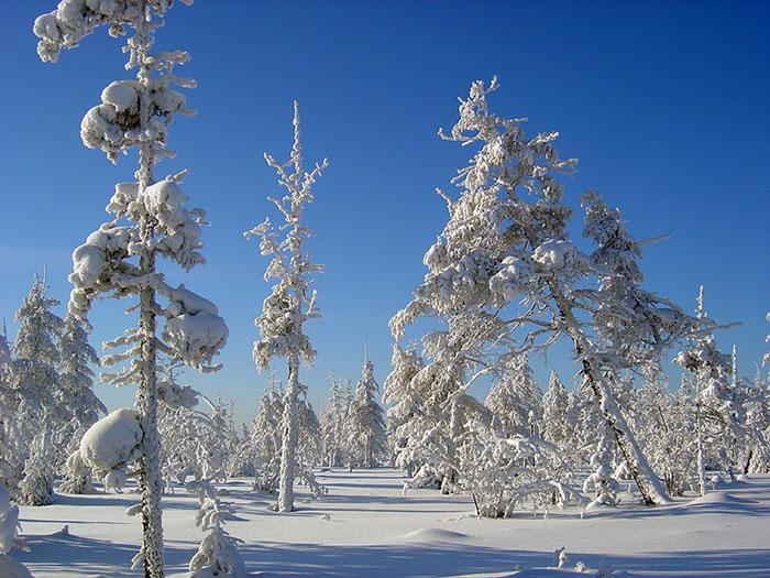 """фото """"Февраль"""" метки: пейзаж, зима, лес"""