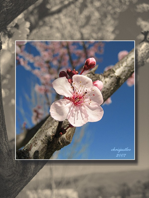"photo ""it's spring"" tags: landscape, nature, flowers, spring"