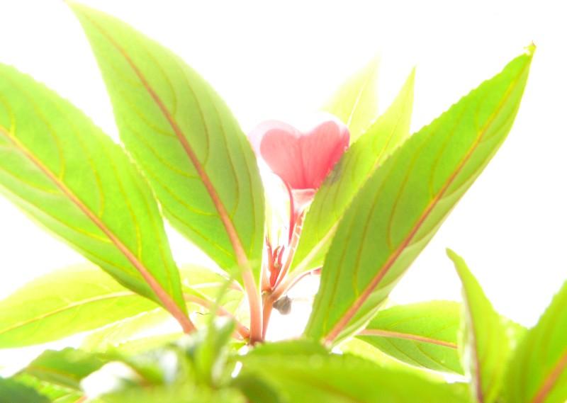"""фото """"Весеннее настроение"""" метки: природа, макро и крупный план, цветы"""