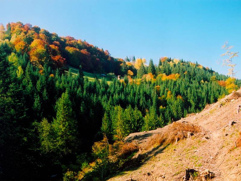 """фото """"Осень Карпат"""" метки: пейзаж, горы, осень"""