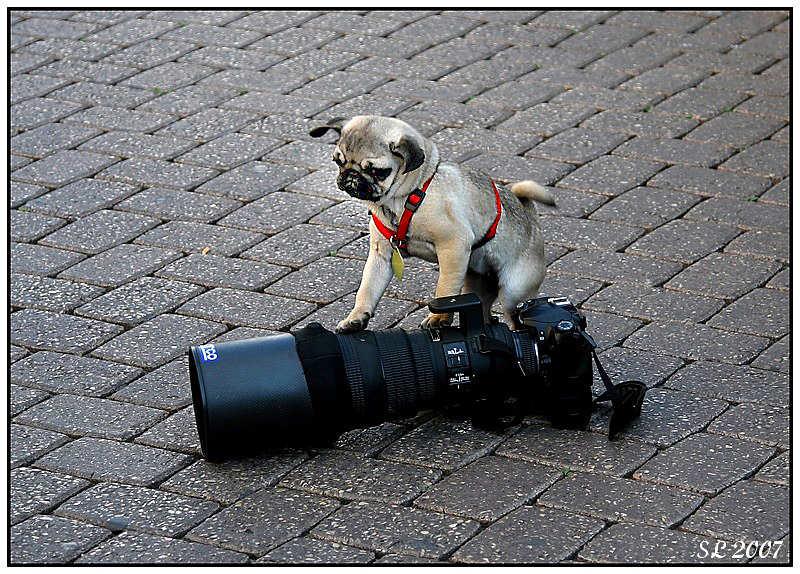 """фото """"Nikon 300 f 2.8"""" метки: юмор, природа, домашние животные"""