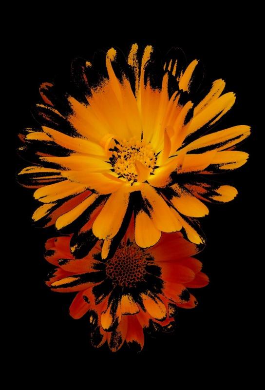 """фото """"Жизнь под прикрытием"""" метки: природа, цветы"""