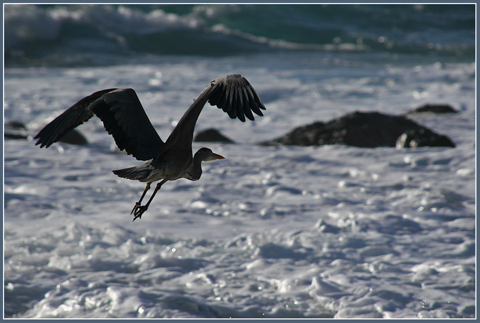 "photo ""Flying away"" tags: landscape, nature, water, wild animals"