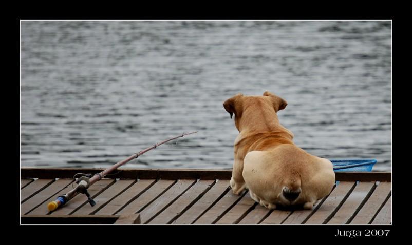 """photo """"Waiting - 2"""" tags: ,"""
