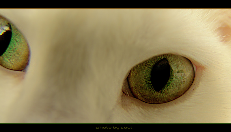 "photo ""....."" tags: nature, macro and close-up, pets/farm animals"