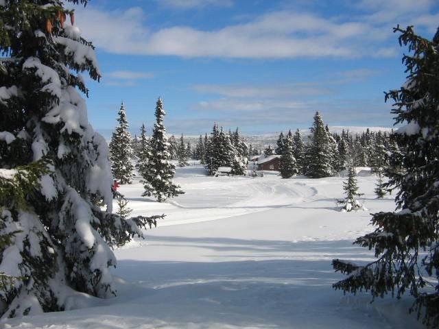 """фото """"Winter holidy"""" метки: природа,"""