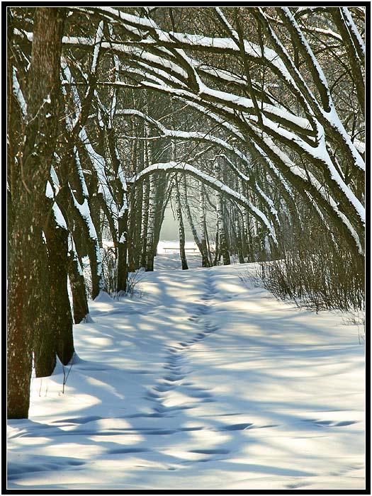 """фото """"Заснеженная аллея"""" метки: пейзаж, зима"""