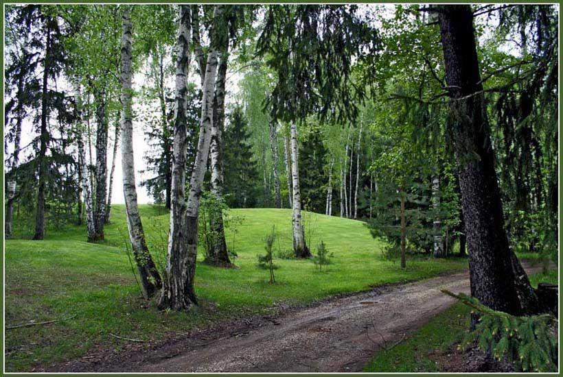 """photo """"Березки на гольф поле"""" tags: landscape, forest"""